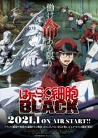 import animé - Hataraku Saibô Black