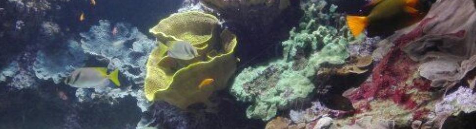 Krakene