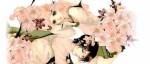 Aperçu du manga Tue-moi plutôt sous un cerisier aux éditions Akata