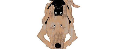 Découvrez l'histoire vraie de Rady, un chat aux petits soins chez nobi nobi !