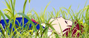 le royaume des chats et pompoko arrivent en blu ray 13 janvier 2015 manga news. Black Bedroom Furniture Sets. Home Design Ideas