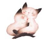 Ronrons petits chatons nobi visual 2