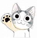 Chi vie de chat visual 2